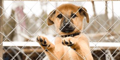Hondje achter tralies
