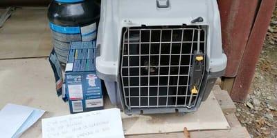 Box vor Tierheim abgestellt: Helfer über Inhalt empört