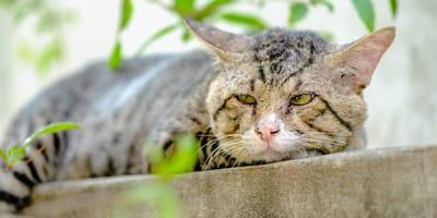 Hanebüchener Grund: Katzen-Oma wird mit 16 im Tierheim Köln entsorgt
