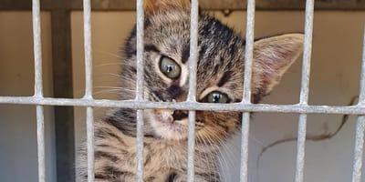 gato abandonado en Murcia