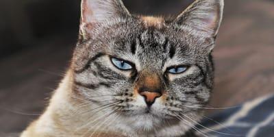 Investigación revela la clave para que tu gato confíe en ti