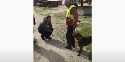 perro se reencuentra con su amo