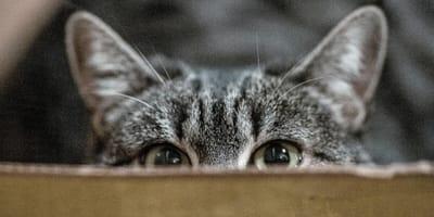 Czający się na ciebie kot.