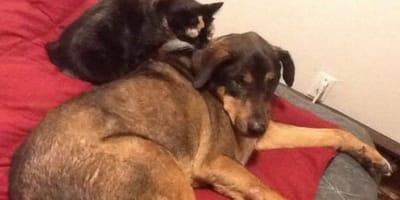 perro y gato abrazados