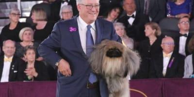 Ecco Wasabi, il Pechinese eletto cane più bello d'America!