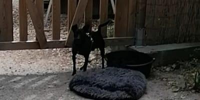 cane-nero-lasciato-davanti-al-rifugio-con-la-cuccia