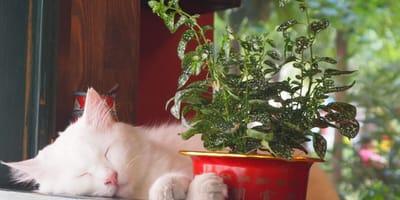 Rośliny doniczkowe i balkonowe bezpieczne dla kota - lista