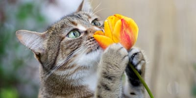 Które kwiaty są bezpieczne, a które trujące dla kota?
