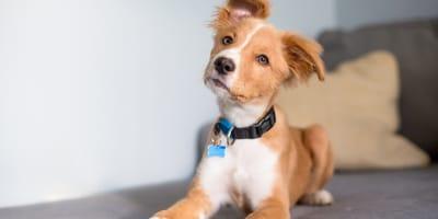 Collari per cani: sceglili e abitualo ad indossarli