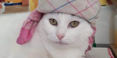olivia-gatta-con-cappello