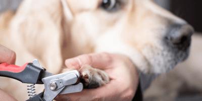 Nagels knippen bij de hond - stapvoorstap