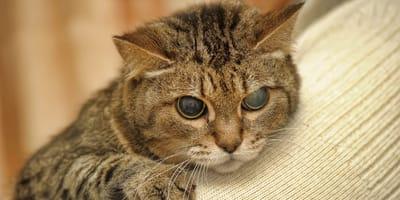 Blinde Katzen: Praktische Tipps zur Haltung