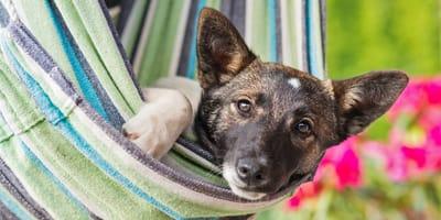 Was Hundefreunde jetzt im JULI auf jeden Fall wissen müssen