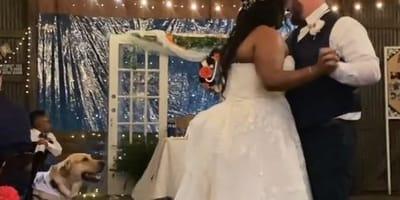 sposi-ballano-il-loro-cagnolino-li-guarda