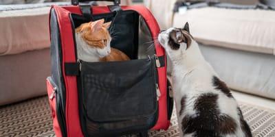 Come trasportare il tuo gatto in vacanza