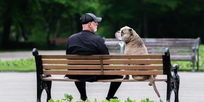 Come far uscire il cane e addestrarlo nel modo giusto?