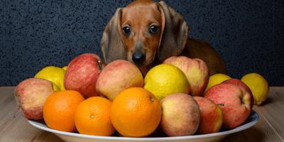 Hond tussen fruit