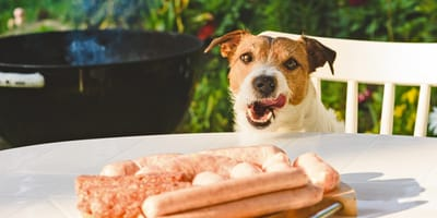 Hund mit Bratwurst