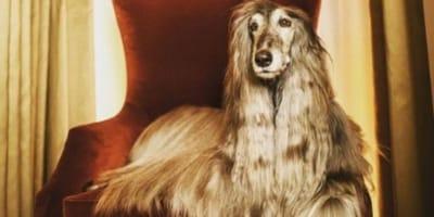 Iraida, il cane modello che tutti i grandi marchi vogliono (Foto)