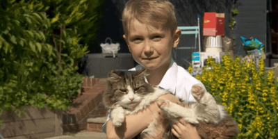 Family cremate their dead cat: Days later, they realise they made a huge mistake