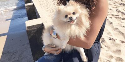 Raad het ras en de speler! Weet jij het ras van deze kleine hond?
