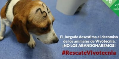 La Comunidad de Madrid permite que se siga experimentando con animales en Vivotecnia