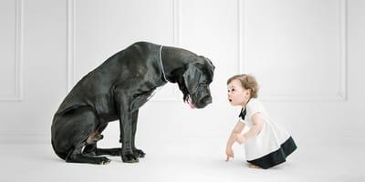 13 razas de perros grandes