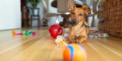 I migliori giocattoli per cane da usare con il tuo Fido