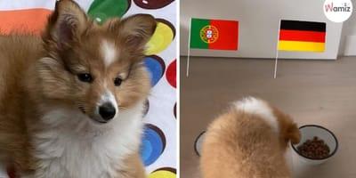 Portugal-Deutschland: Hunde-Fußball-Orakel sagt SENSATION voraus!