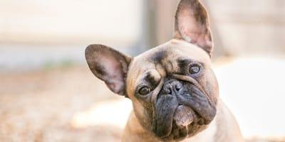 Estas son las 5 razas de perros más populares en Argentina