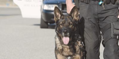 Policía de la CDMX rescata a perrito abandonado, lo toca y su vida cambia para siempre