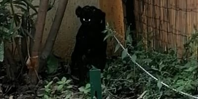 perro abandonado en la puerta de un refugio