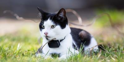 ¿Cómo funcionan los GPS para gatos?