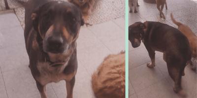 perro abandonado albergue