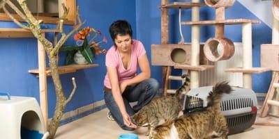 9 modi per creare un'accogliente casa per gatti