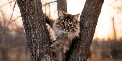 Stoere kattennamen: de 60 stoerste kattennamen ooit!