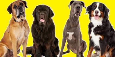 Nombres para perros grandes