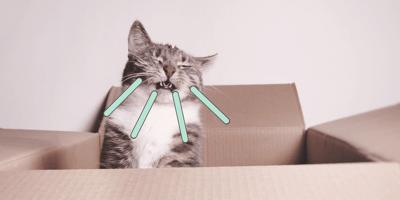 Mi gato estornuda, ¿debo preocuparme? Causas y remedios