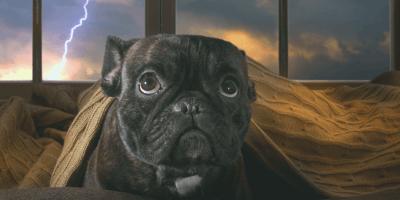 ¿Qué hacer si mi perro tiene miedo a los truenos?