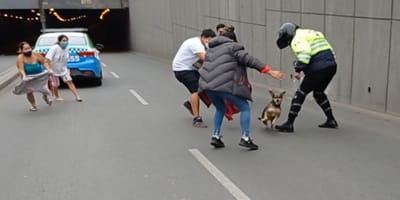 Una perrita hace que cierren una transitada avenida de Lima