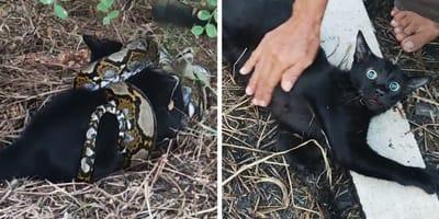 Python schnappt sich Dorfkatze, doch hat die Rechnung ohne die Bewohner gemacht!