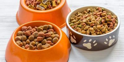 ¿Qué es la comida seca para perros?