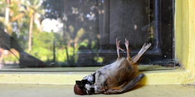 Fiestas patronales: los peligros de tirar petardos para los animales