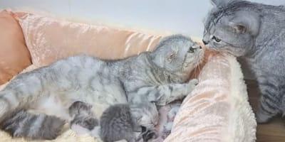 papà-gatto-va-a-conoscere-i-suoi-piccoli