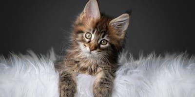 Kattennamen met betekenis: de 45 mooiste namen voor jouw kat