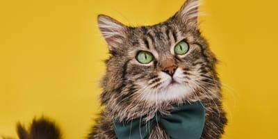 <p>Een originele naam maakt jouw kat extra speciaal</p>