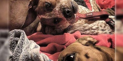 This strange photo of a dog is driving everyone nuts: What do you see?