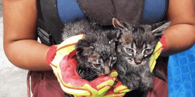 gatos bebés rescatados