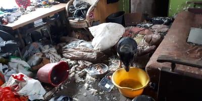 Pies Dino w zaśmieconym domku działkowym.