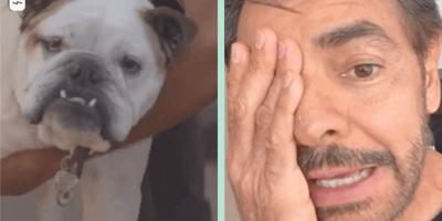 eugenio derbez perro